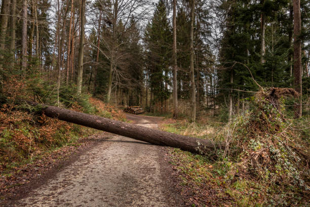 Big tree fallen across the woodland path after a big storm Big tree fallen across the woodland path after a big storm fallen tree stock pictures, royalty-free photos & images
