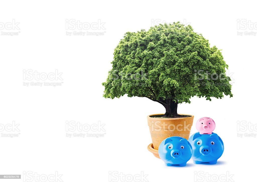 Big tree in flowerpot and family piggy bank stock photo