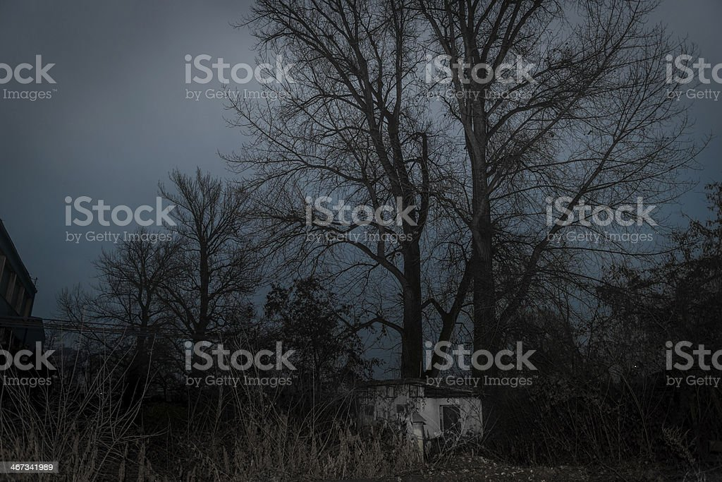 Big tree next to a small house stock photo