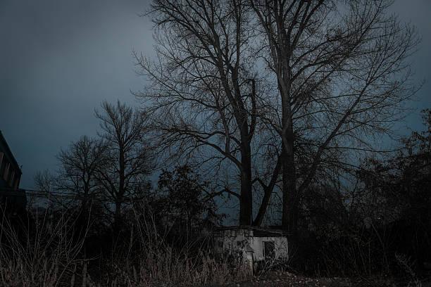 Big tree next to a small house stock photo