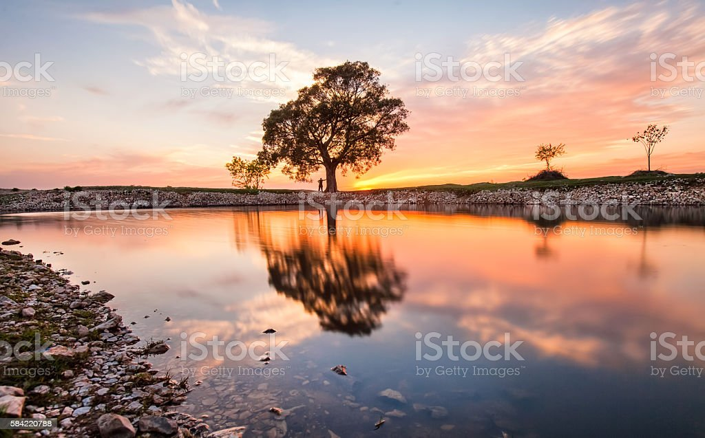 Big tree on the bank of a river. stock photo