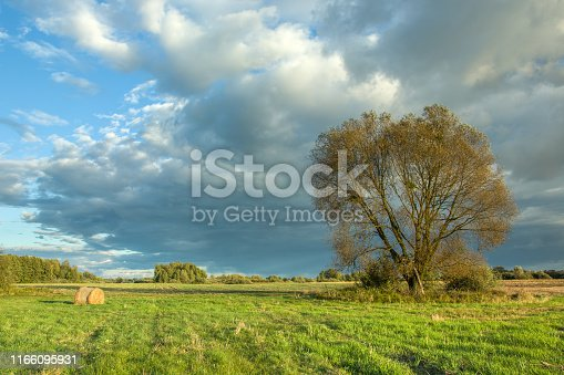 Big tree on the meadow and dark stormy cloud