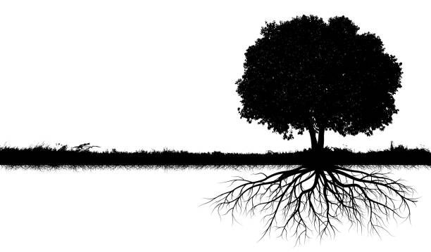 big tree silhouettes - root stock photos and pictures
