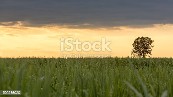 1083309578 istock photo Big tree stand alone 502586020