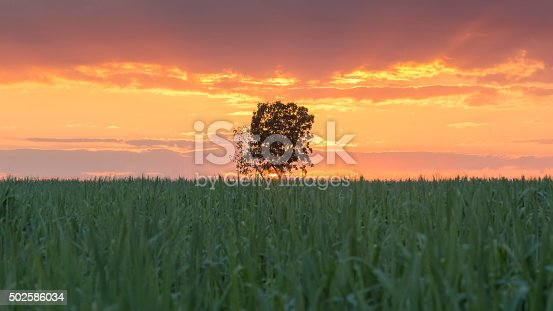 1083309578 istock photo Big tree stand alone 502586034