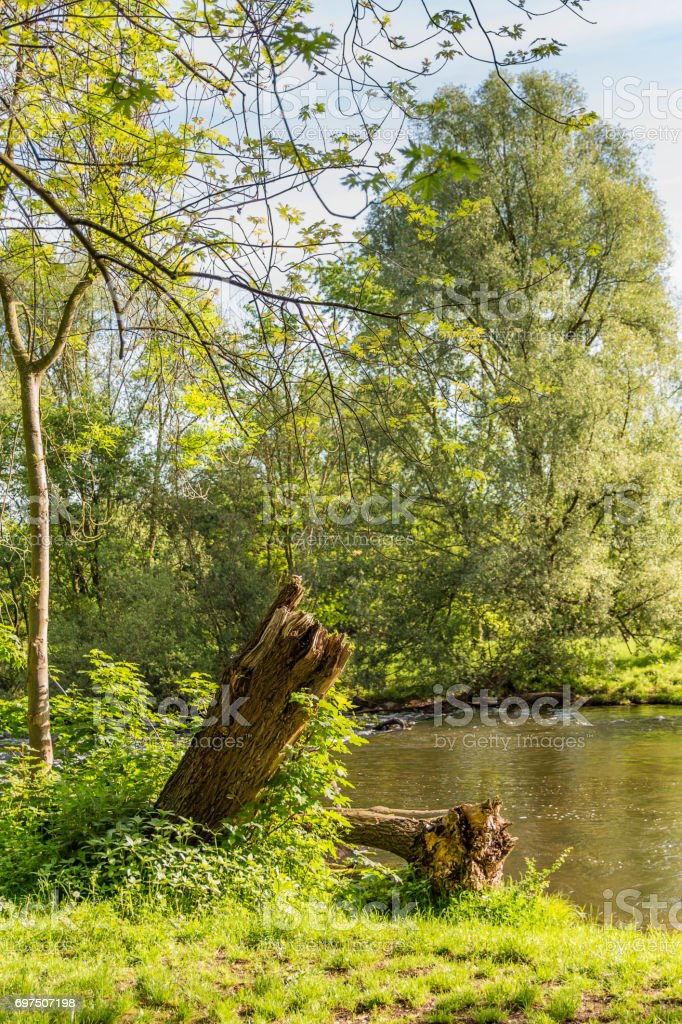 Big tree stump on the bank of a river stock photo