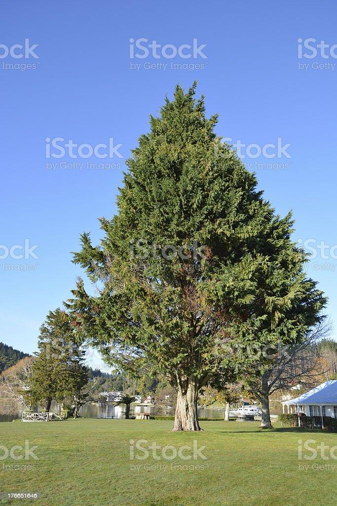 Big tree with Blue sky royalty-free stock photo