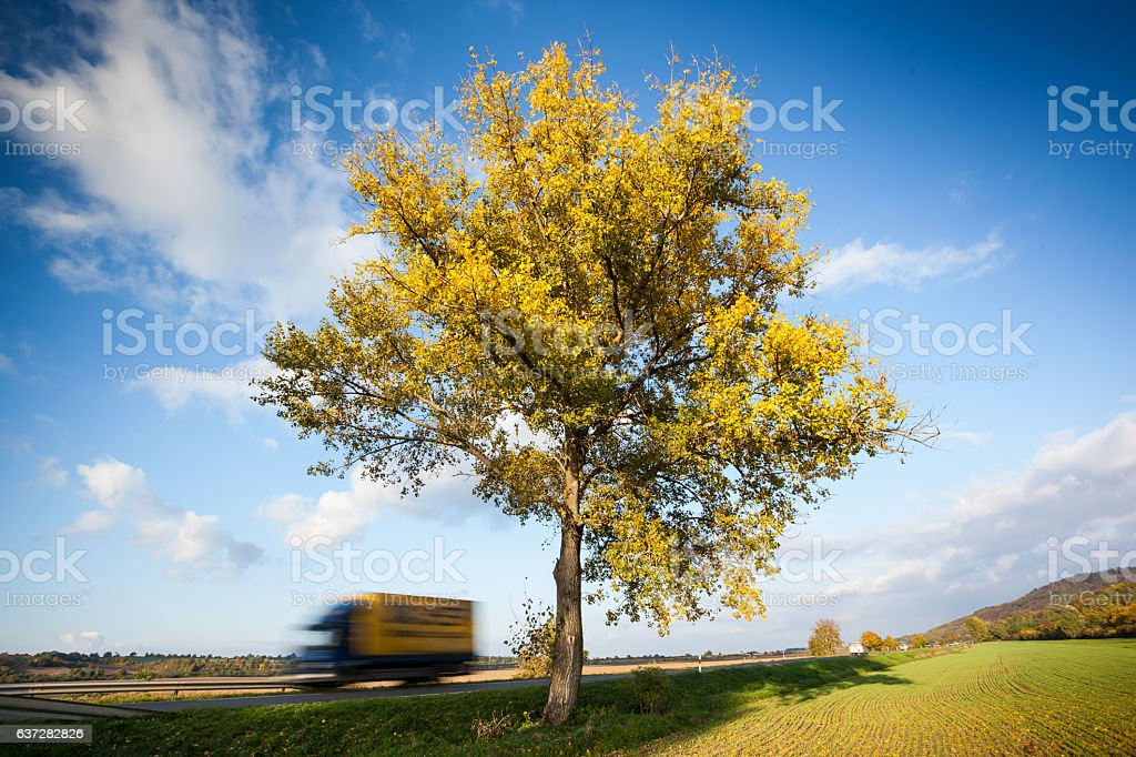 big tree with higway stock photo