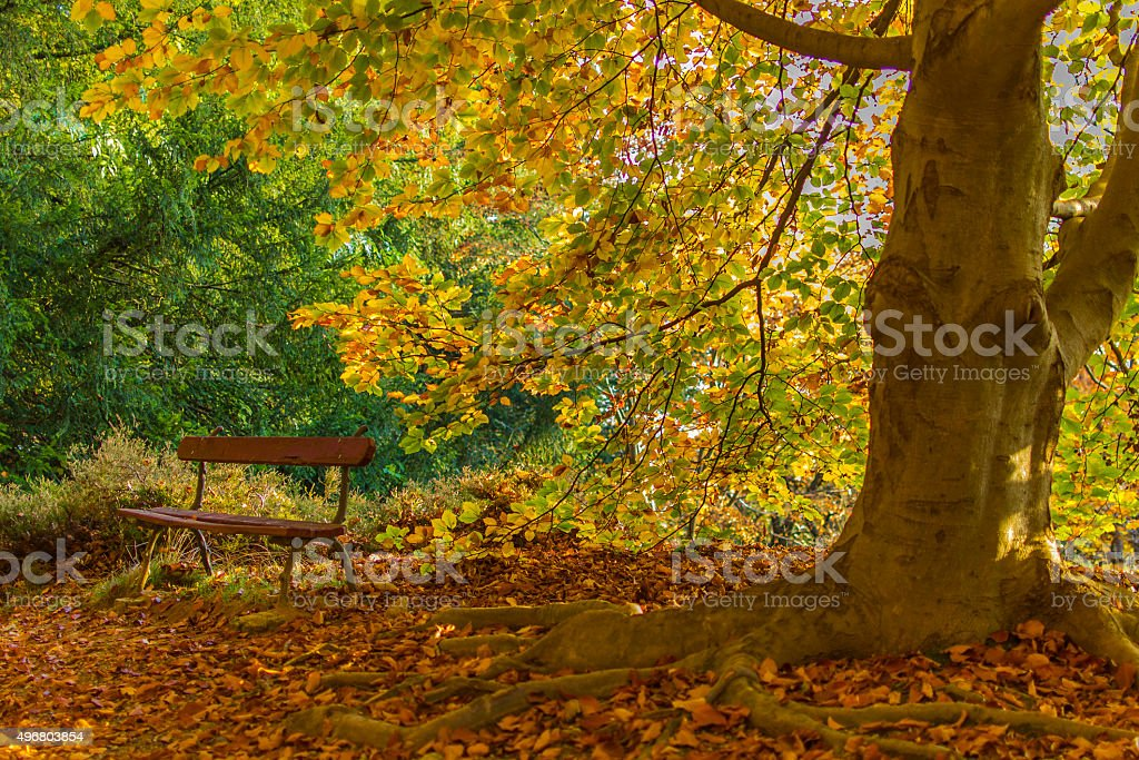 Big tree with roots covered with leaves (Biella, Piedmont, Italy stock photo