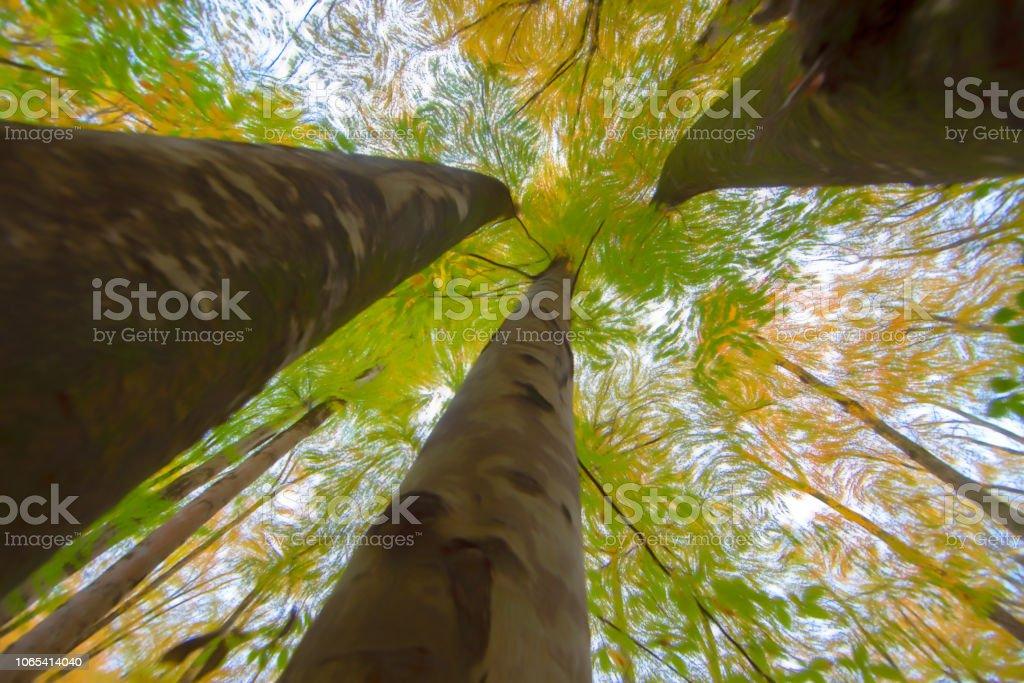 Büyük ağaçlar ile geniş açı - filtre stok fotoğrafı