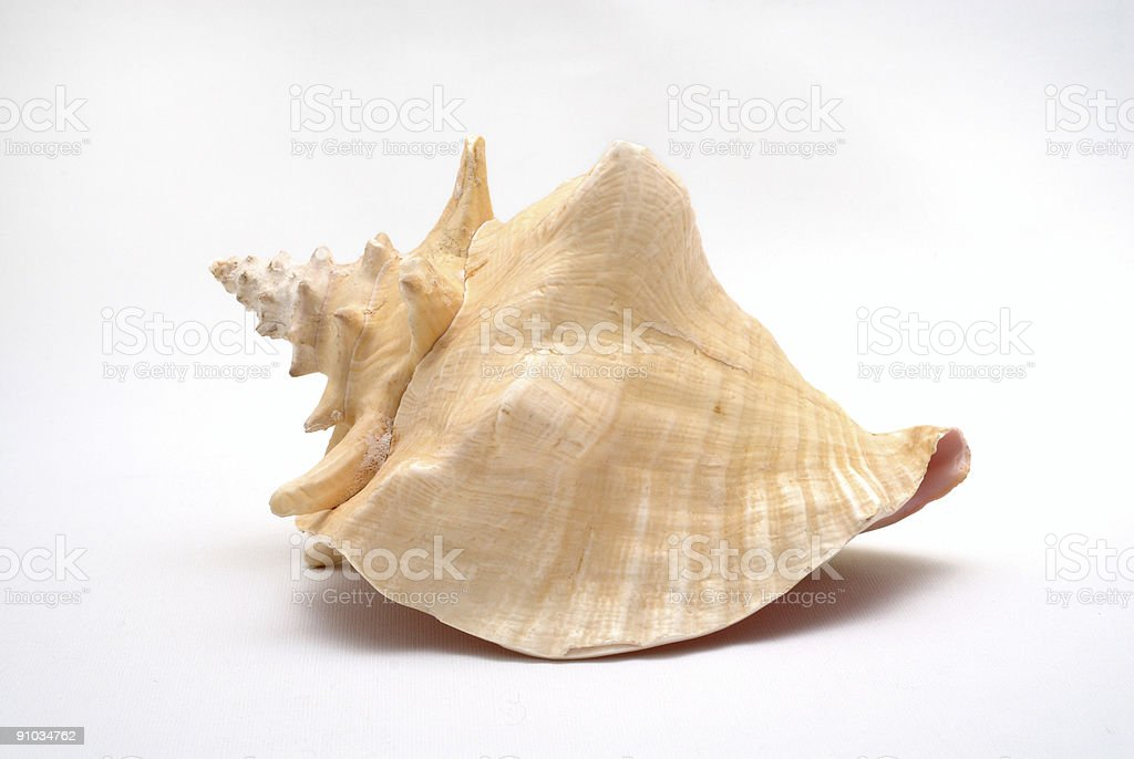 Big tropischen seashell – Foto