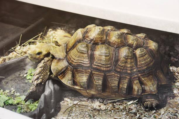 grote schildpad in aquarium - leatherback mouth stockfoto's en -beelden