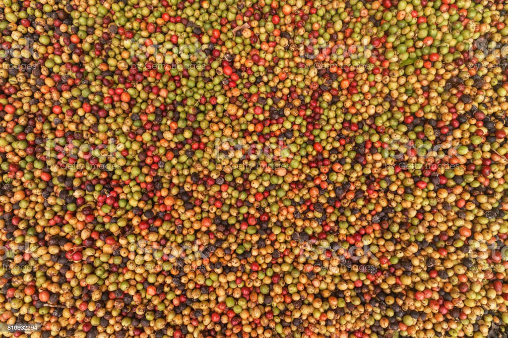 Big variety of coffee beans stock photo