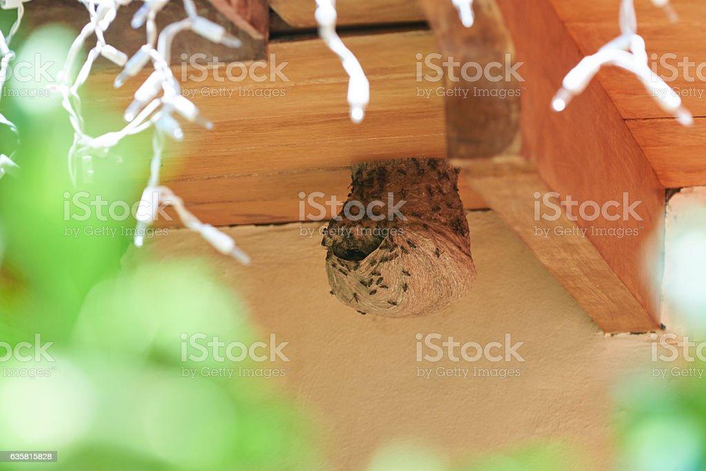 BIg wasp nest stock photo