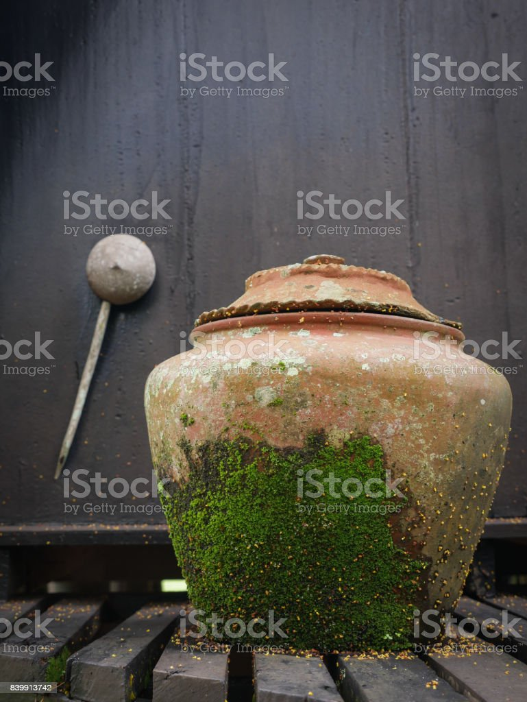 big water jar covered with green moss stock photo