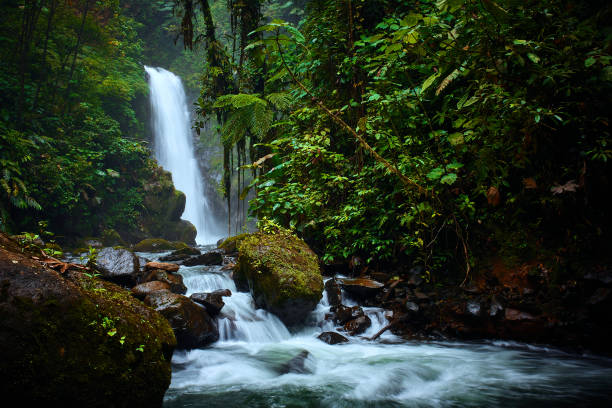 Big waterfall in tropical forest. La Paz Waterfall garden, beautiful tourist place in Costa Rica. stock photo