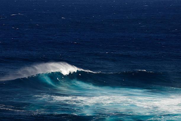 big wave - dents des animaux photos et images de collection