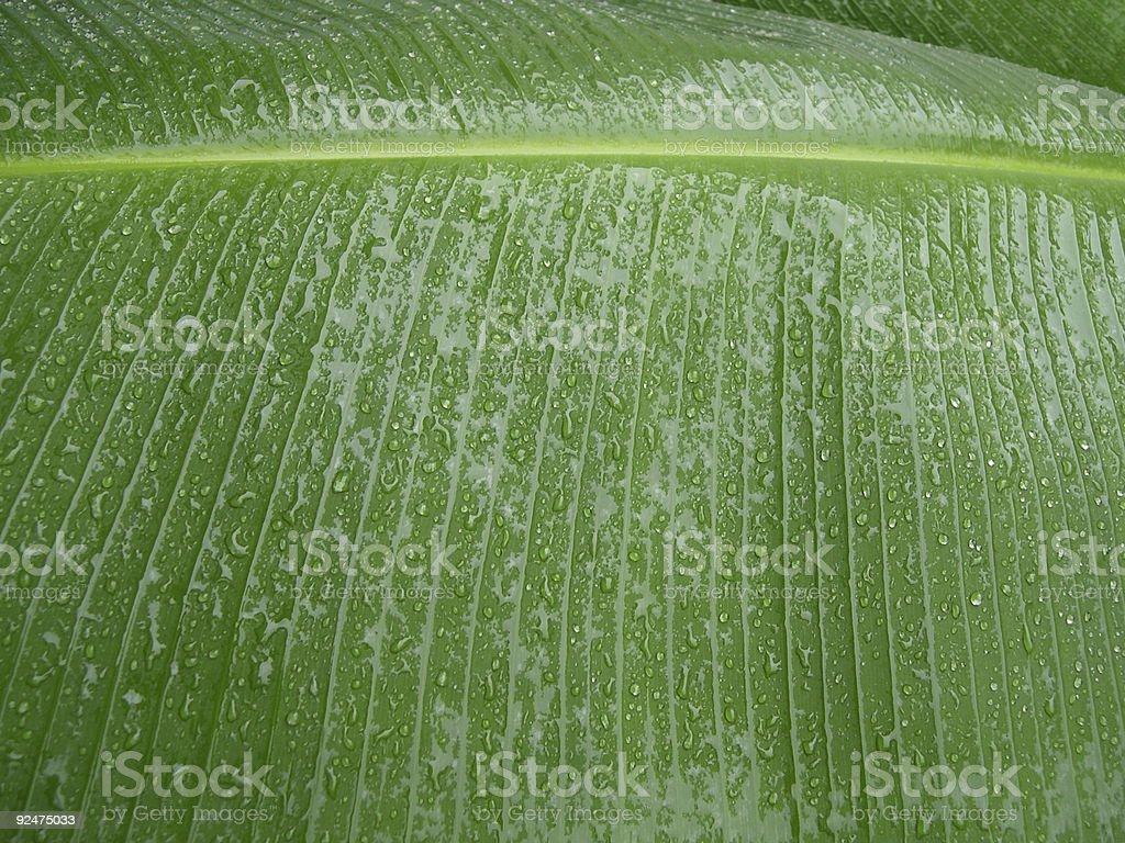 Big wet leaf royalty-free stock photo