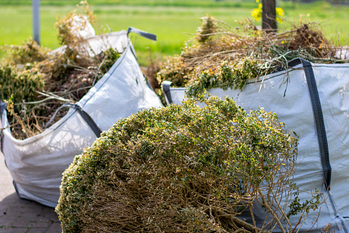 Big white bags filled with organic green garden waste after gardening. Local councils collecting green waste to process it into green energy and compost.