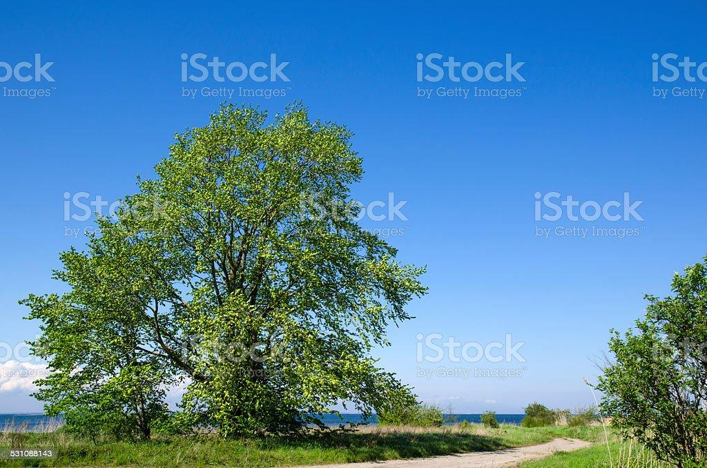 Big, wide tree stock photo