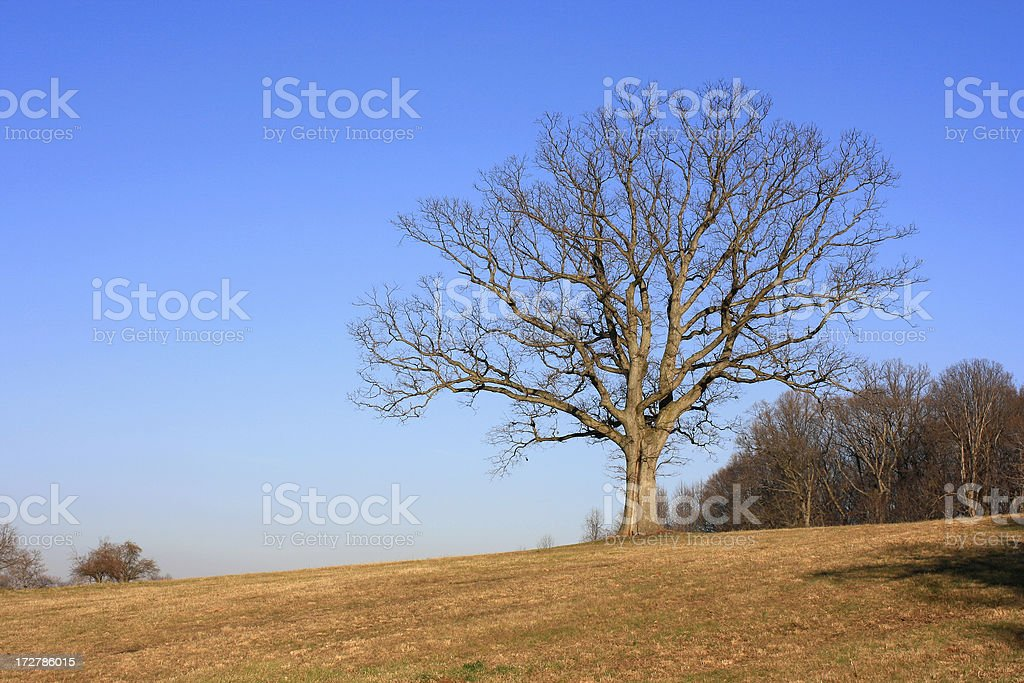 Big Winter Tree on a rural hill. stock photo