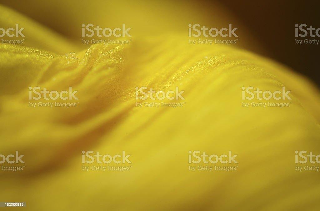 Big yellow sheet 2 royalty-free stock photo