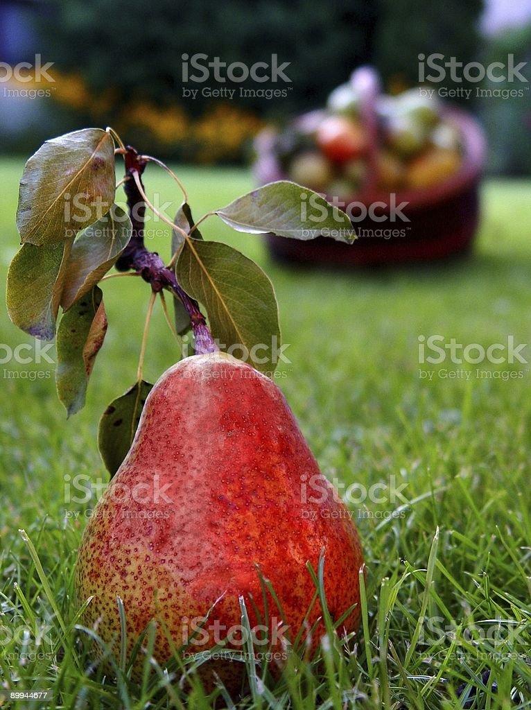 big, yummy pear royalty-free stock photo