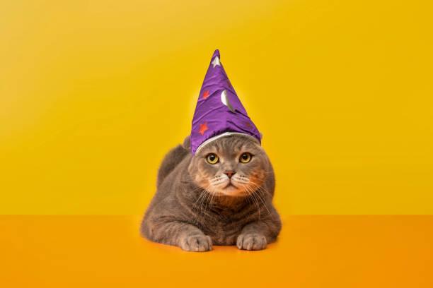 Bigeyed cat on the desk with wizardssorcerers hat grey color british picture id1198444168?b=1&k=6&m=1198444168&s=612x612&w=0&h=kngnkrmcyx2ikyeweh0cvlmsj0zmpqyjyogjwpqsahi=