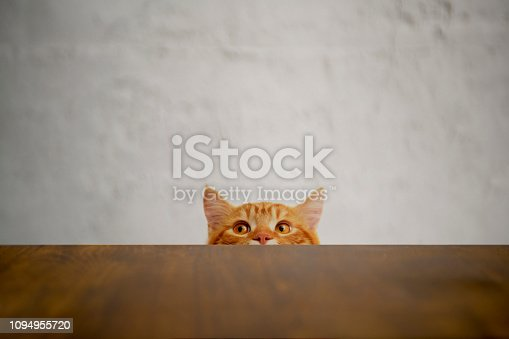 istock Big-eyed naughty cat looking at the target. British sort hair cat. 1094955720