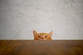 Cat series at home