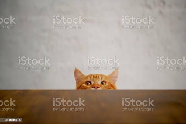 Bigeyed naughty cat looking at the target british sort hair cat picture id1094955720?b=1&k=6&m=1094955720&s=612x612&h=n51y6npqfgrtu4o1nhqv8otgqlmomivmy4dl xfibbm=