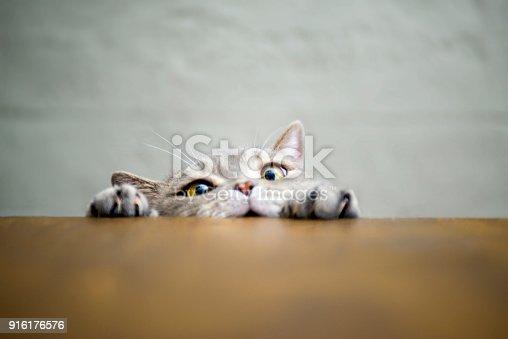 Obeze Cat Series