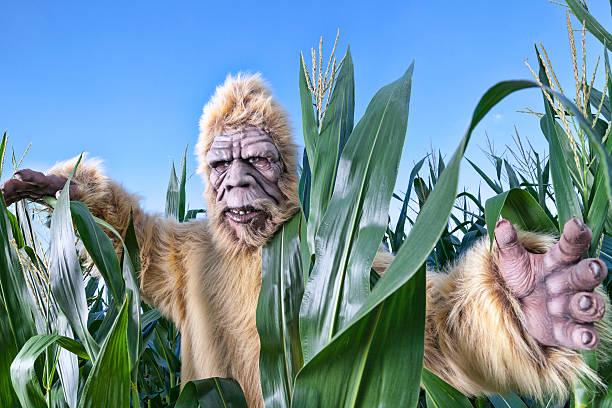 Bigfoot corn picture id174750904?b=1&k=6&m=174750904&s=612x612&w=0&h=ofa l6rvy4lugexifgy0t dyqvfbehpienalwzvkbvo=