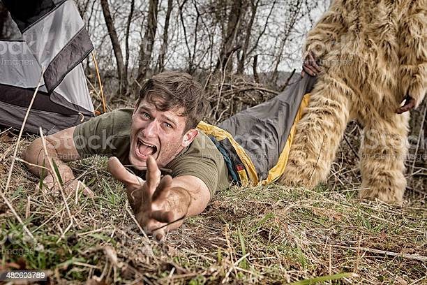 Bigfoot dragging off a camper thru the woods picture id482603789?b=1&k=6&m=482603789&s=612x612&h=nhfsdvr54cbmvfcrzr7zs8o7oiywdzlm8dwinwpgvwy=