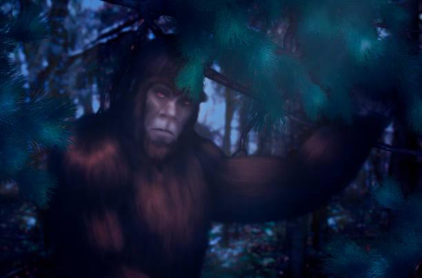 Bigfoot in the forest on a moonlit night picture id1133067068?b=1&k=6&m=1133067068&s=612x612&w=0&h= sp5w2rjxaqnec0gerh3qnnntlkdorcr6obwqeywghu=