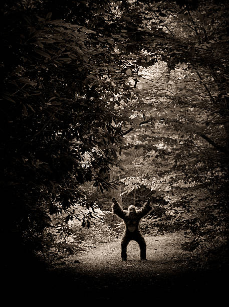 Bigfoot making an appearance on a dirty road picture id157641091?b=1&k=6&m=157641091&s=612x612&w=0&h=30j6xtfawyjavkbys4cwasdcbw1ezovjaseixk 4dqe=