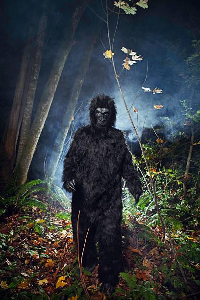 Bigfoot or wild gorilla in dark woods picture id108313083?b=1&k=6&m=108313083&s=612x612&w=0&h=njzum 8dj1c0abou96v67tp2ujzclnindllqh9btxcq=