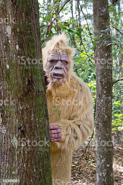 Bigfoot sasquatch picture id530658361?b=1&k=6&m=530658361&s=612x612&h=isgaromdrpj 7yno9e 2raklxpxb1drzstyg 0b7yca=