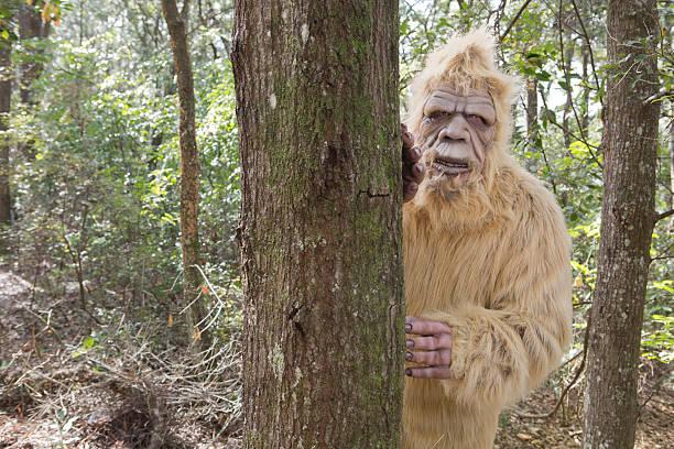 Bigfoot sasquatch picture id530658371?b=1&k=6&m=530658371&s=612x612&w=0&h=tek7jy1bp8o 6n2xjp8va0gc1lx51jyflebmulq0fne=