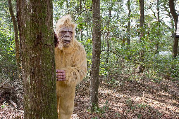 Bigfoot sasquatch picture id530658389?b=1&k=6&m=530658389&s=612x612&w=0&h= gjcex8gtg wuhb7 hdve3bhex8l8itxjzlaf3moqaw=