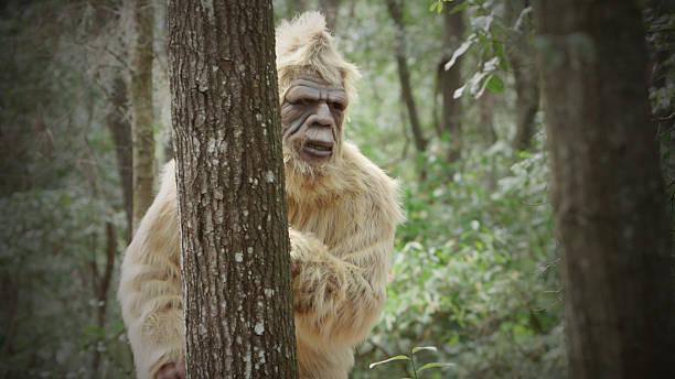 Bigfoot sasquatch picture id530890771?b=1&k=6&m=530890771&s=612x612&w=0&h=jeh aunebpxqwi3s q fvonmrxwkq3g1rutschdwcjs=