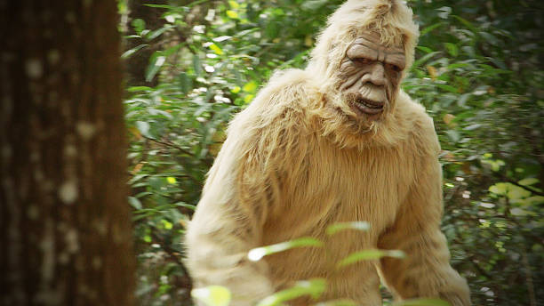 Bigfoot sasquatch picture id530890797?b=1&k=6&m=530890797&s=612x612&w=0&h=thay0qx4asg b5nlasxx40hqtoa6qbsvrhpq8i myu0=