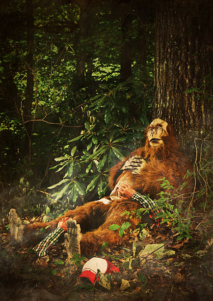Bigfoot sleeping after eating a human picture id108348231?b=1&k=6&m=108348231&s=612x612&w=0&h=eb k649ltc zdlaj fdfmz8xjunwq bwnt6p4nqhvca=