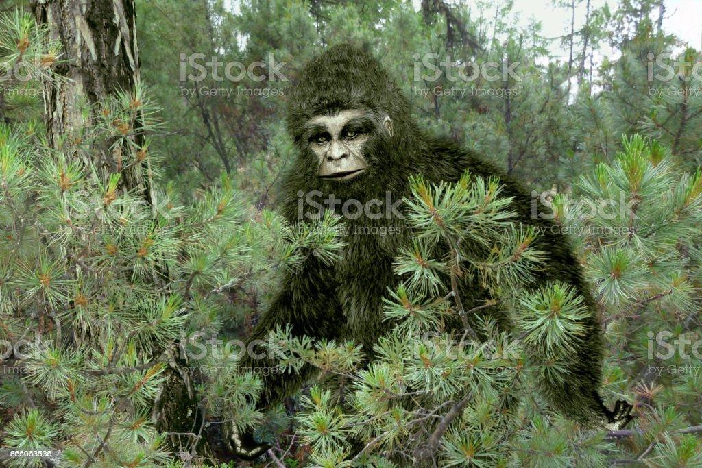 Bigfoot, Yeti. stock photo