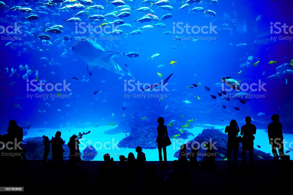 Biggest aquarium in the world. Atlanta, Georgia. stock photo