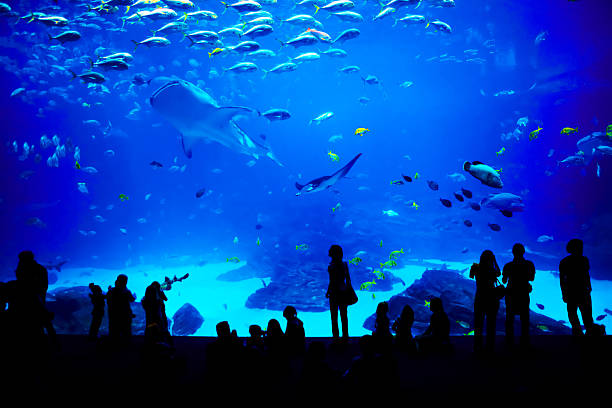 Biggest aquarium in the world. Atlanta, Georgia. People looking at fishes in biggest aquarium in the world. Atlanta, Georgia. aquarium stock pictures, royalty-free photos & images