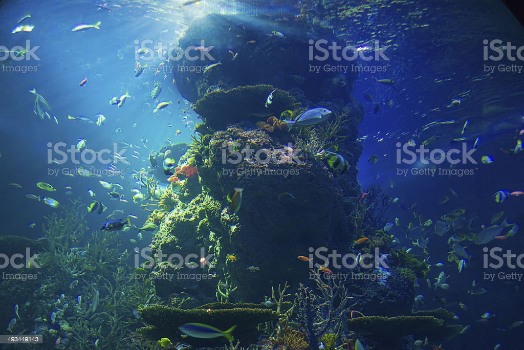 Biggest aquarium in the world stock photo