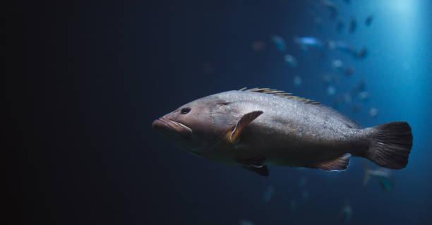 Biggest fish in the sea stock photo