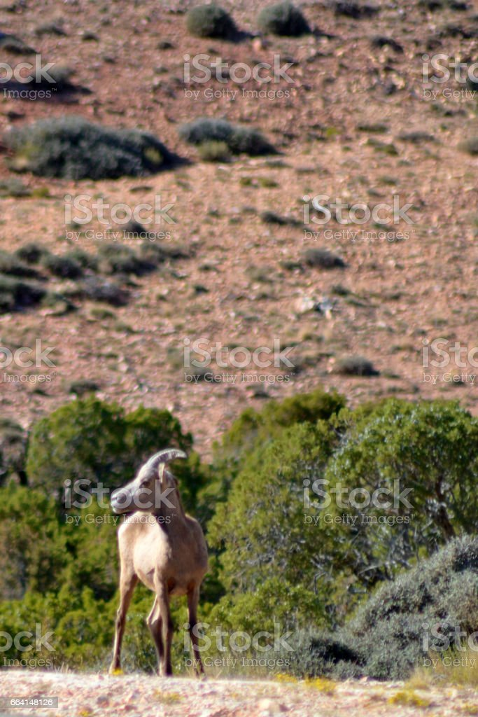 Bighorn Canyon National Recreation Area, Wyoming, USA foto stock royalty-free
