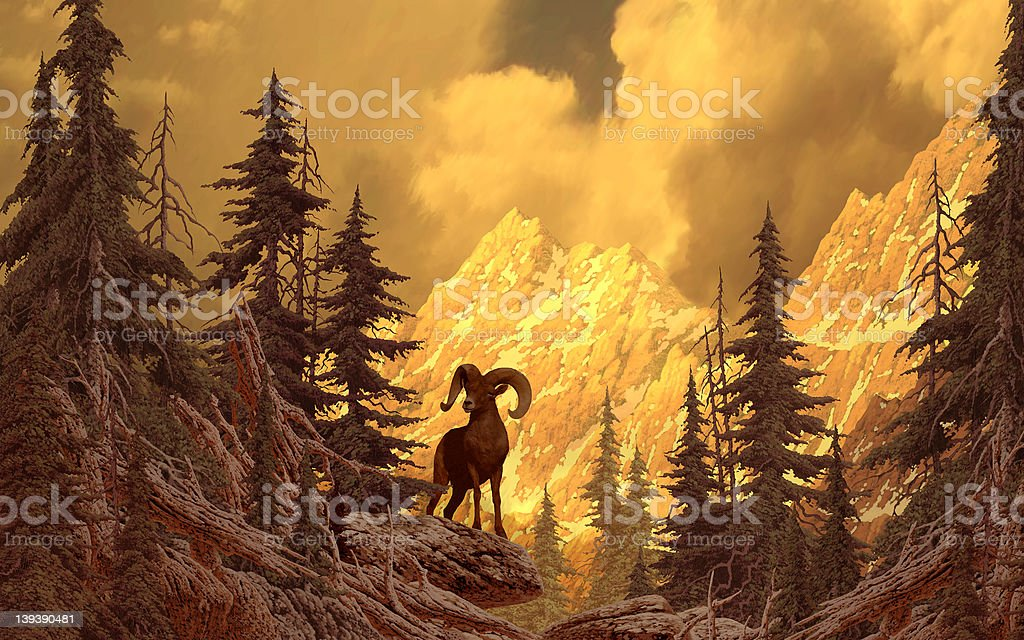Bighorn Sheep In The Rocky Mountains stock photo